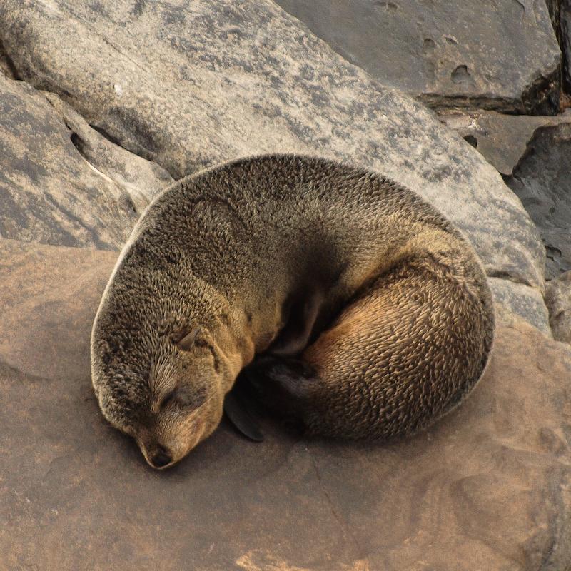 Seal Island Australia
