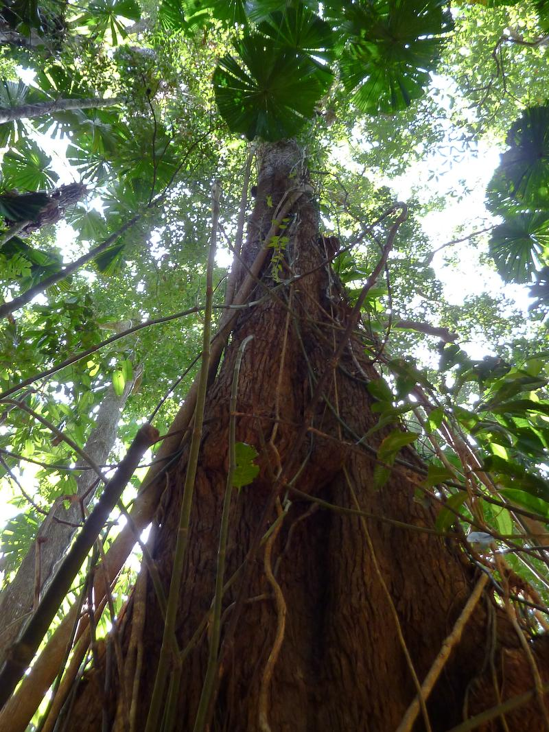 What are some types of trees in the rainforest?