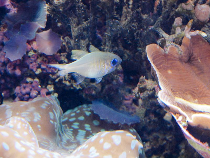 Cool aquarium fish cake ideas and designs for Cool tropical fish