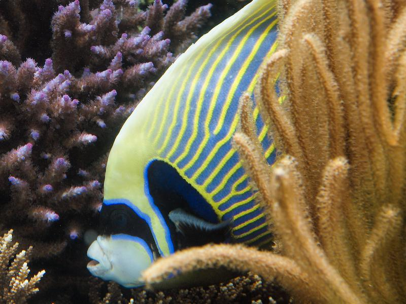 Image Colorful Aquarium Fish Download