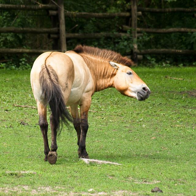 Przewalski S Horse Food Source